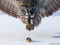 mouse&owl.png